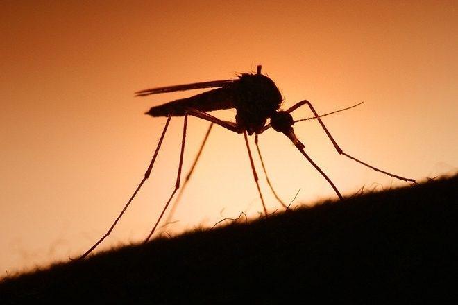 La musique de Skrillex pourrait nous protéger des attaques de moustiques