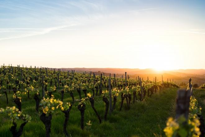 Un weekend entre house, dégustation de vin et spectacle sur un grand domaine viticole