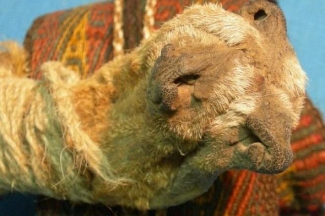 On a découvert des hallucinogènes et de la cocaïne vieux de 1 000 ans en Bolivie